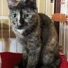 美猫なさびねこ サムネイル4