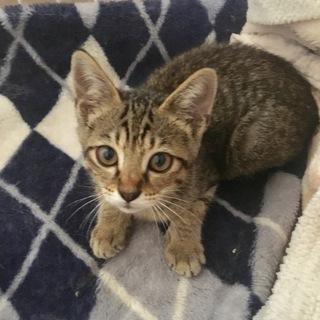 3ヶ月美人のメス猫ちゃん