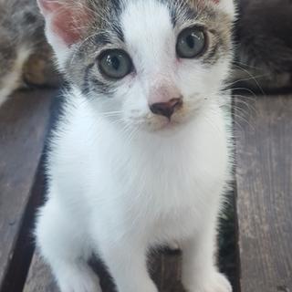 子猫(三ヶ月)の里親募集中