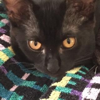 すらっとスリムな黒猫ちゃん