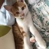 元気で甘えん坊の3ヶ月の男の子 サムネイル2
