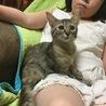 珍しい長毛サビトラ美保護子猫ちゃん