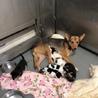 保健所ママになった、児島の野犬、つるちゃん サムネイル2