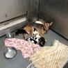 保健所ママになった、児島の野犬、つるちゃん サムネイル3
