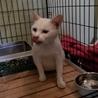 処分間近 人懐っこい白猫ちゃん 動画あり サムネイル3