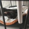 生後3ヶ月くらいの黒猫の女の子です!人見知りです サムネイル3