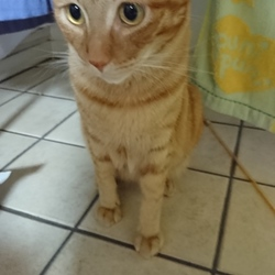 猫の困り顔について