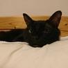 ネグレストから解放された黒猫、カール君 サムネイル2