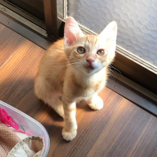 4月20日生まれの子猫差し上げます。