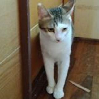 去勢済み、生後1年ほどの保護猫です。