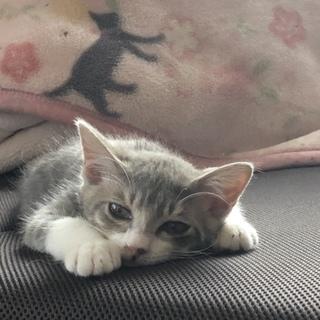 生後三ヶ月の仔猫の里親募集