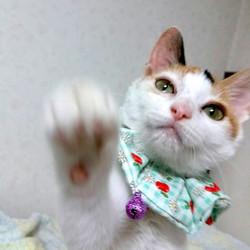 *子猫〜1歳くらいのネコ譲渡会*