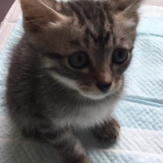 保護した子猫(キジトラ)