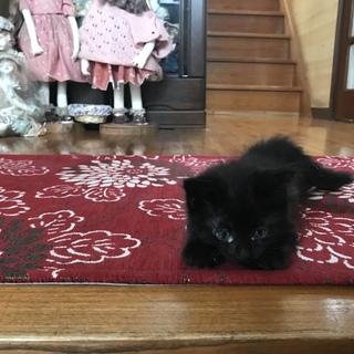 産まれて2週間の赤ちゃん猫