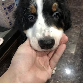 バニの子犬3ヶ月目です。(里親様全頭決まりました