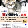 """猫の譲渡会 in 芦屋 """" 猫のミーナ """""""
