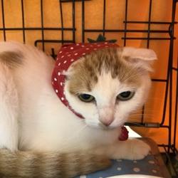 シュリのおうち主催 保護っ子犬猫譲渡会