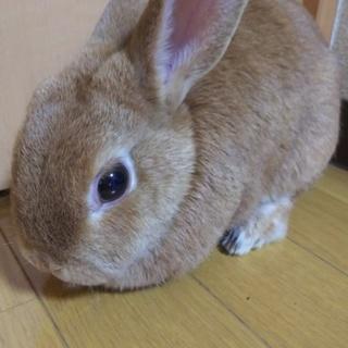 メスウサギのキューです♪