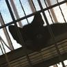 生後3ヶ月くらいの黒猫の女の子です!人見知りです サムネイル4