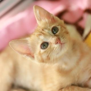 めちゃめちゃ甘えたさんの抱っこ猫さんです。