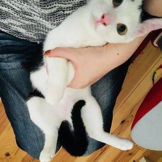 白黒ヅラ猫、片方だけまろ眉のまろちゃん