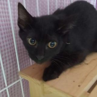 捨て猫だった美人子猫の黒猫ちゃん