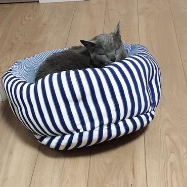 猫ベッドで寝てるプーチン