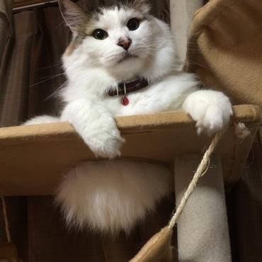 猫タワーから…はみ毛…Σ(°Д°;)