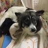 緊急!母犬と乳飲み子を助けて下さい。動画有り