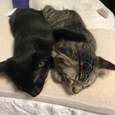 とても仲良しで、気づくと寄り添い寝てます