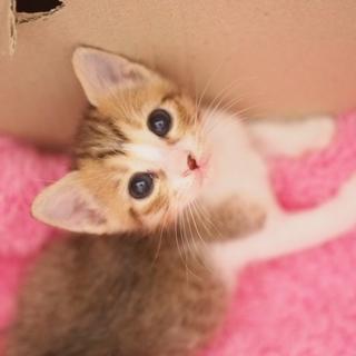 瞳の大きな美猫【來夏】