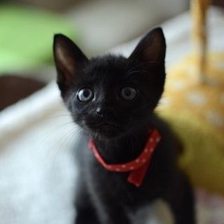 子熊系黒猫男子【麗市】