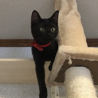 人が大好きな黒猫の女の子 ひまわりの里親募集