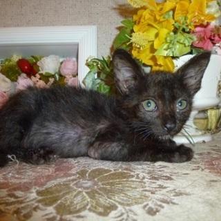 1ヶ月のとても可愛い赤ちゃん猫!