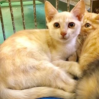 子猫3匹親子で収容されています