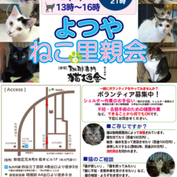 8月17日(金) 地域猫から社会猫へ FIPフリー 四谷猫廼舎 ナイター里親会(ボランティア募集中) サムネイル1