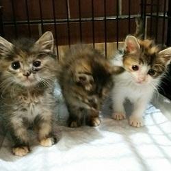 8月17日(金) 地域猫から社会猫へ FIPフリー 四谷猫廼舎 ナイター里親会(ボランティア募集中) サムネイル2