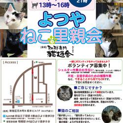 8月25日(土) 地域猫から社会猫へ FIPフリー 四谷猫廼舎 里親会(ボランティア募集中)