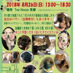 緊急☆7匹の仔犬の里親会を開催します