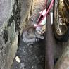 怪我した子猫を発見した。