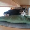 野良猫家族を、保護したいと考えています。