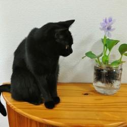 猫パンチしているの?