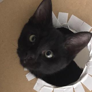 抱っこ大好き黒猫ちゃんの家族を探しています。