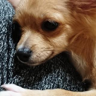 小型犬1歳です