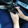 1ヶ月半♡人懐っこい美人黒猫ちゃん