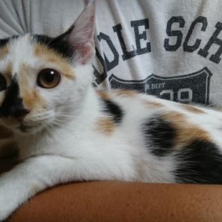 珍しい模様の三毛猫ちゃん