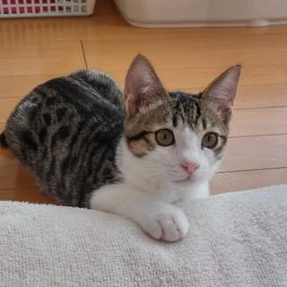 生後3か月 チュパチュパフミフミ甘えん坊 ペコ