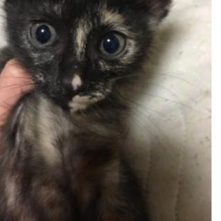 サビ柄メス黒猫メス