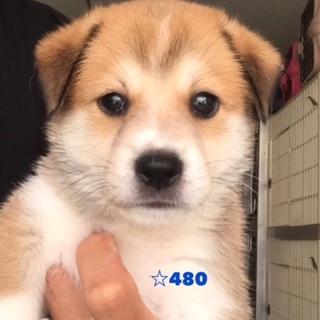 ☆480 可愛い子犬ちゃん
