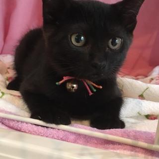 慣れ慣れ可愛い黒猫2ヶ月